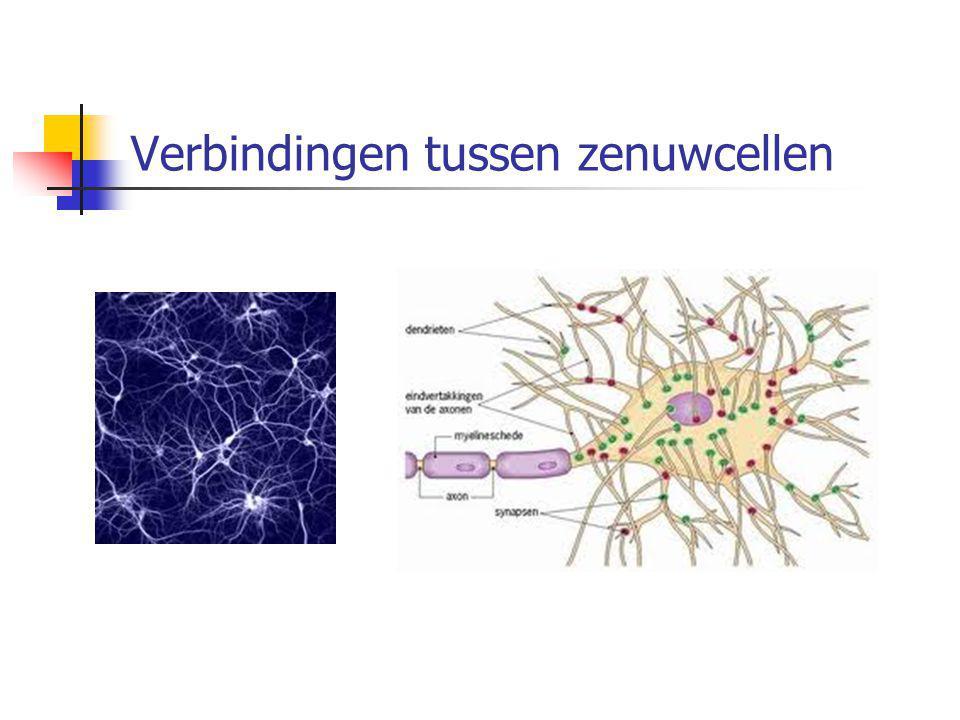 Verbindingen tussen zenuwcellen