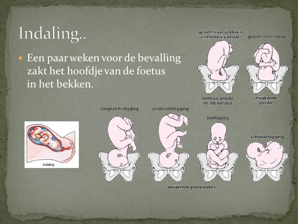 Indaling.. Een paar weken voor de bevalling zakt het hoofdje van de foetus in het bekken.