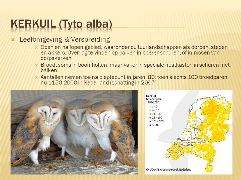 Kerkuil (Tyto alba) Leefomgeving & Verspreiding