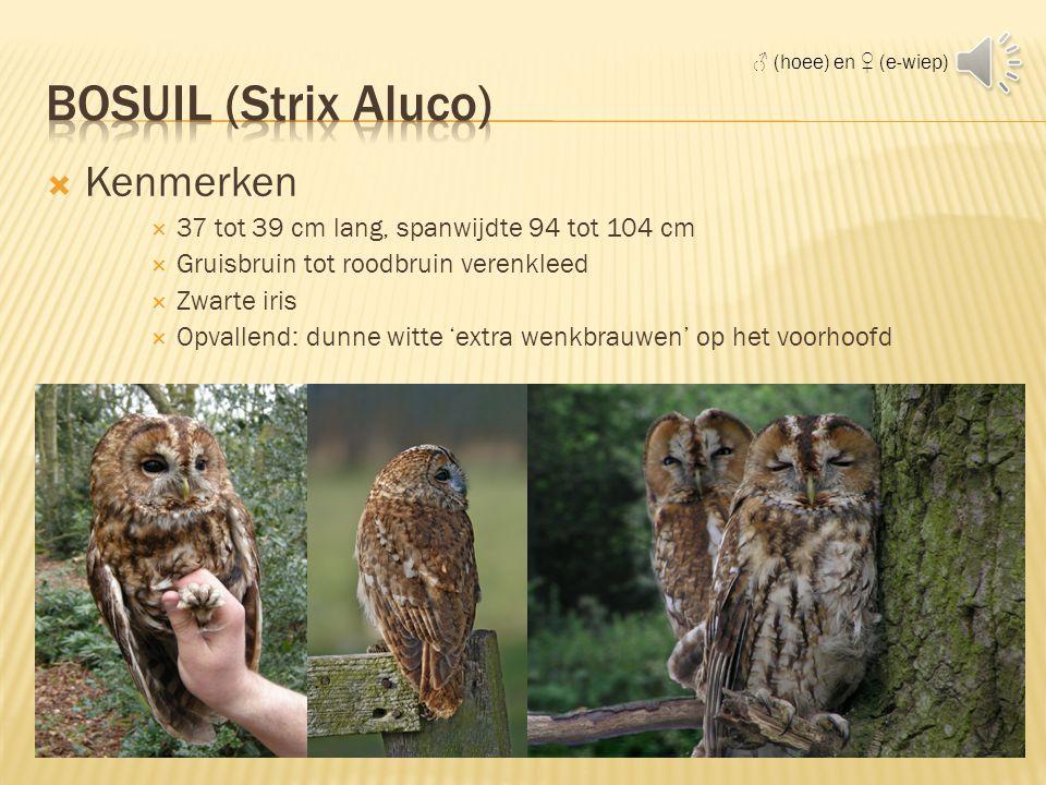 Bosuil (Strix Aluco) Kenmerken