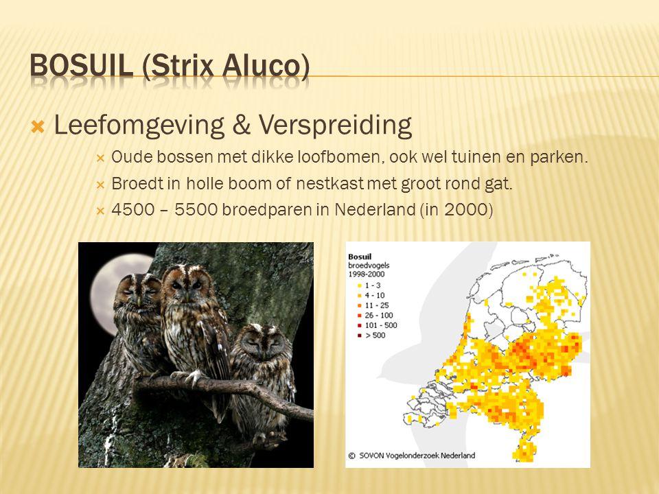 Bosuil (Strix Aluco) Leefomgeving & Verspreiding