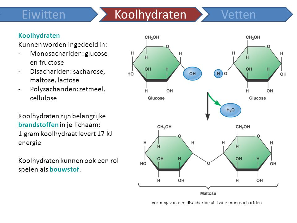 Eiwitten Koolhydraten Vetten Koolhydraten Kunnen worden ingedeeld in:
