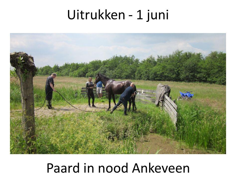 Uitrukken - 1 juni Paard in nood Ankeveen