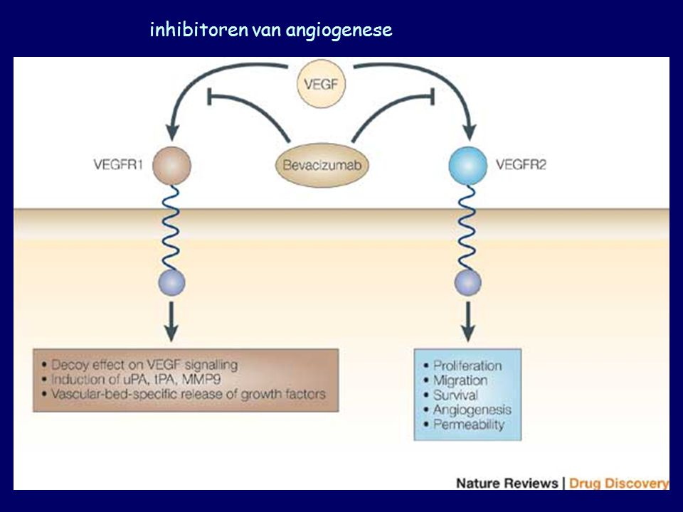 inhibitoren van angiogenese