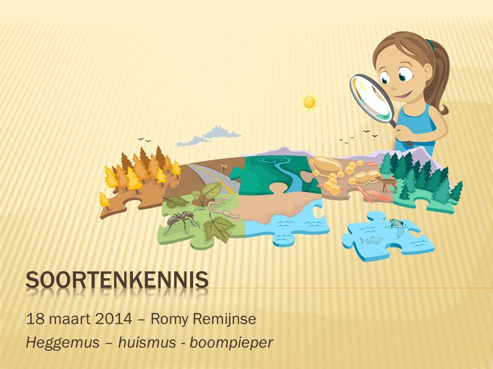 18 maart 2014 – Romy Remijnse Heggemus – huismus - boompieper