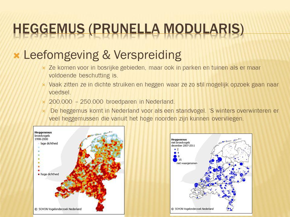 Heggemus (Prunella modularis)