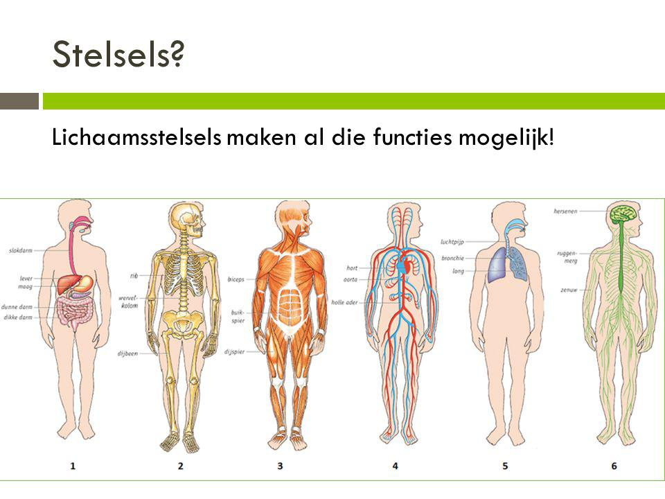 Stelsels Lichaamsstelsels maken al die functies mogelijk!