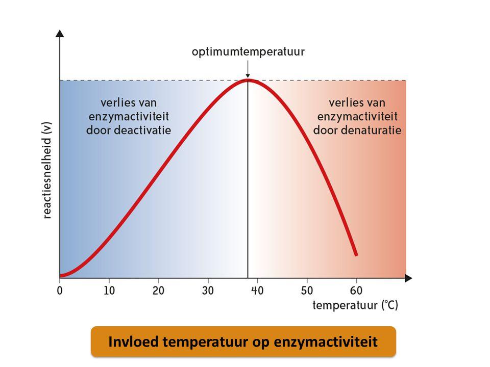 Invloed temperatuur op enzymactiviteit