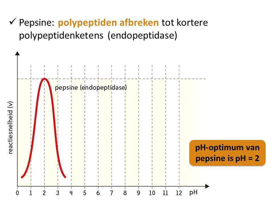 Pepsine: polypeptiden afbreken tot kortere polypeptidenketens (endopeptidase)