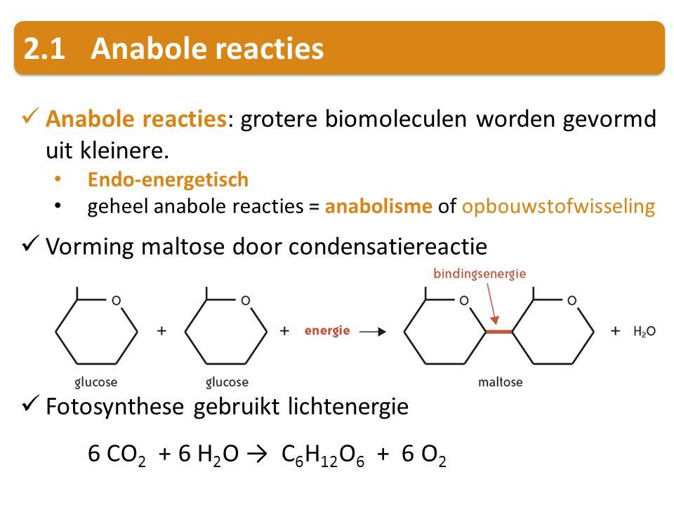 2.1 Anabole reacties Anabole reacties: grotere biomoleculen worden gevormd uit kleinere. Endo-energetisch.