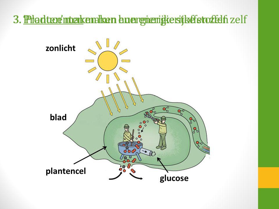 3. Producenten maken hun energierijke stoffen zelf