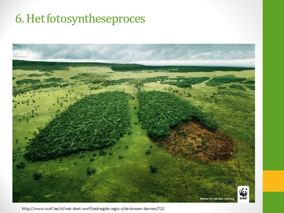 6. Het fotosyntheseproces