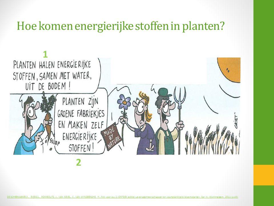 Hoe komen energierijke stoffen in planten