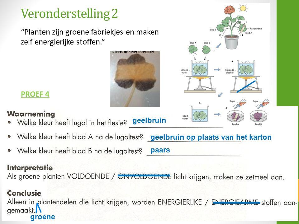 Veronderstelling 2 Planten zijn groene fabriekjes en maken