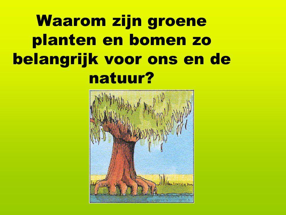 Waarom zijn groene planten en bomen zo belangrijk voor ons en de natuur