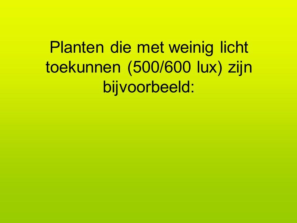 Planten die met weinig licht toekunnen (500/600 lux) zijn bijvoorbeeld: