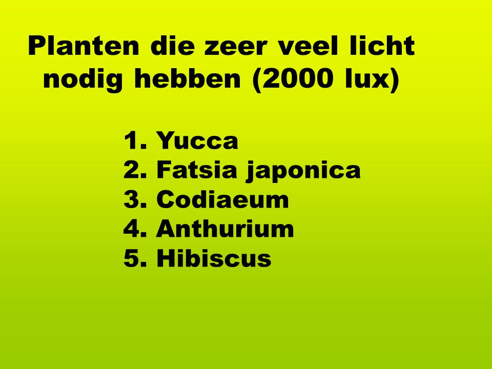 Planten die zeer veel licht nodig hebben (2000 lux)
