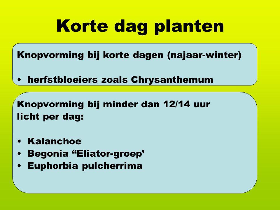 Korte dag planten Knopvorming bij korte dagen (najaar-winter)