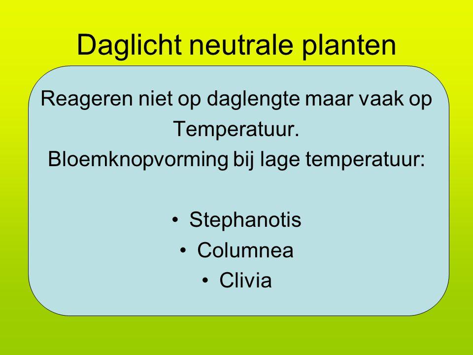 Daglicht neutrale planten