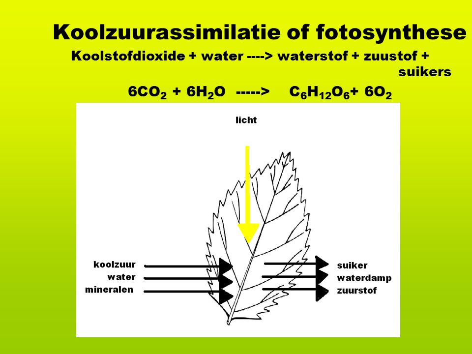 Koolzuurassimilatie of fotosynthese