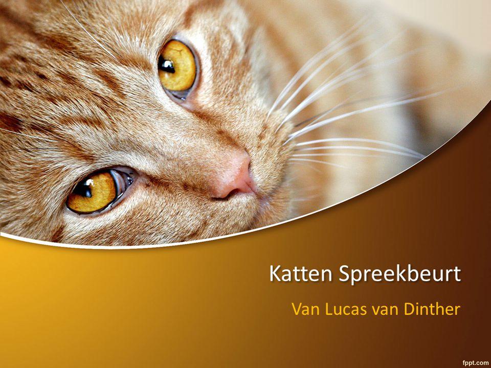 Katten Spreekbeurt Van Lucas van Dinther