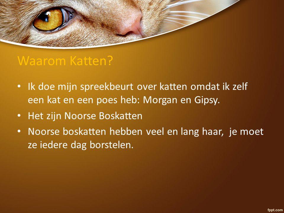 Waarom Katten Ik doe mijn spreekbeurt over katten omdat ik zelf een kat en een poes heb: Morgan en Gipsy.