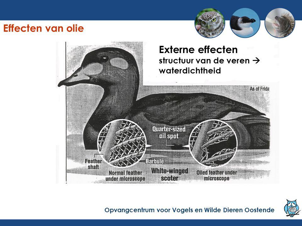 Effecten van olie Externe effecten