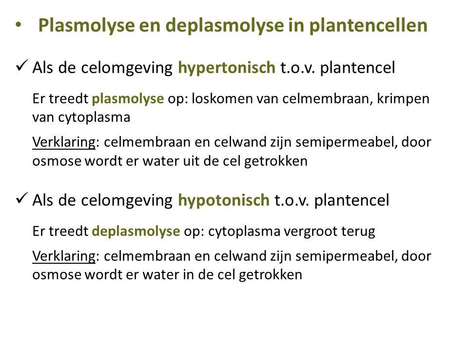Plasmolyse en deplasmolyse in plantencellen