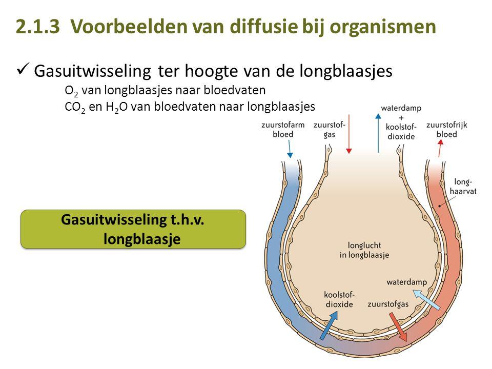 Gasuitwisseling t.h.v. longblaasje