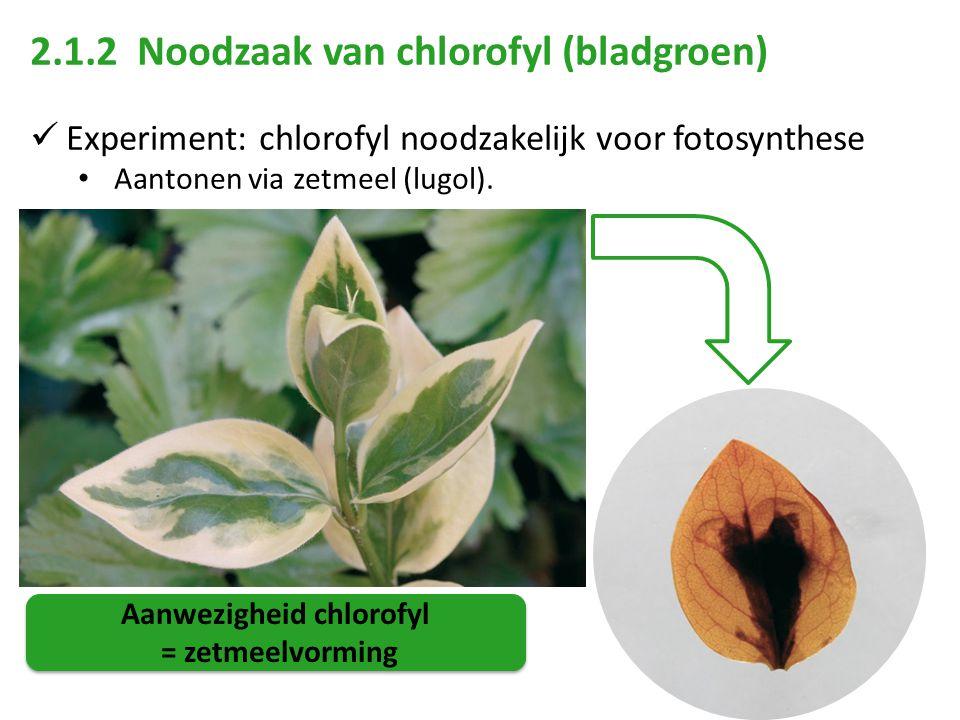 Aanwezigheid chlorofyl