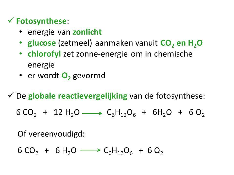 Fotosynthese: energie van zonlicht. glucose (zetmeel) aanmaken vanuit CO2 en H2O. chlorofyl zet zonne-energie om in chemische energie.