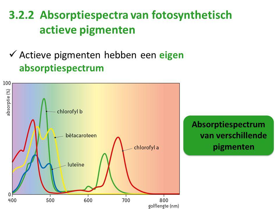 Absorptiespectrum van verschillende pigmenten