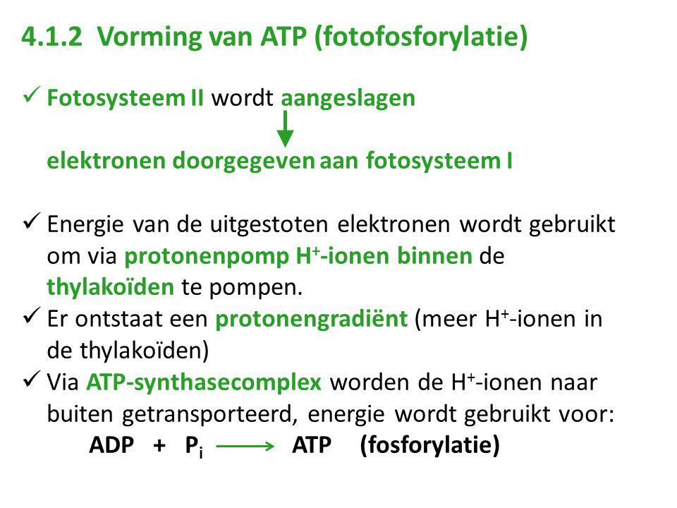 4.1.2 Vorming van ATP (fotofosforylatie)