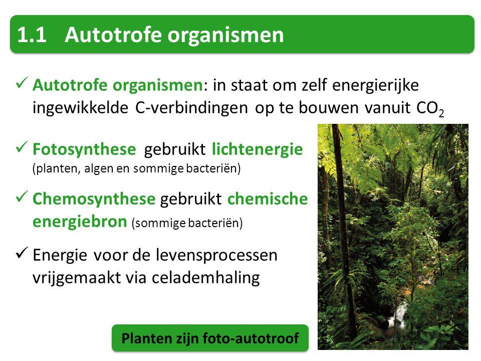 Planten zijn foto-autotroof