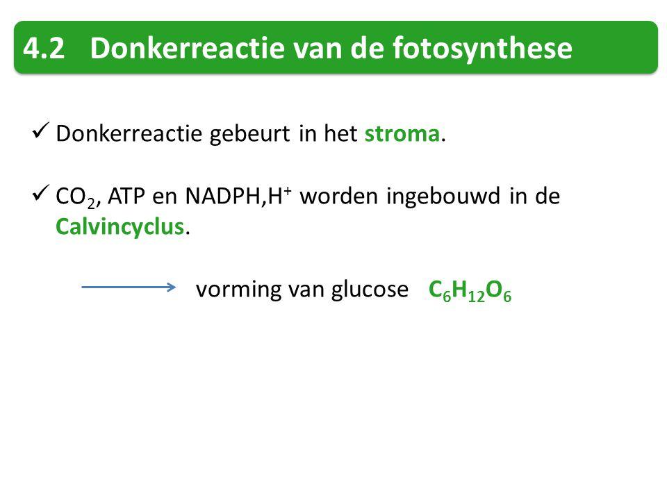 4.2 Donkerreactie van de fotosynthese