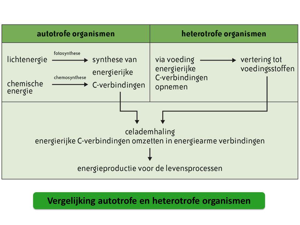 Vergelijking autotrofe en heterotrofe organismen