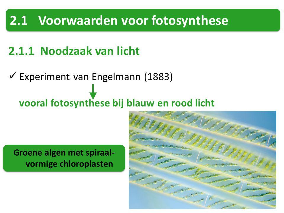 Groene algen met spiraal-vormige chloroplasten