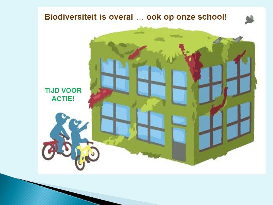 Biodiversiteit is overal … ook op onze school!
