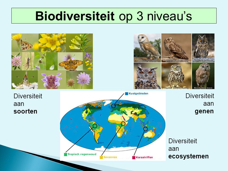 Biodiversiteit op 3 niveau's