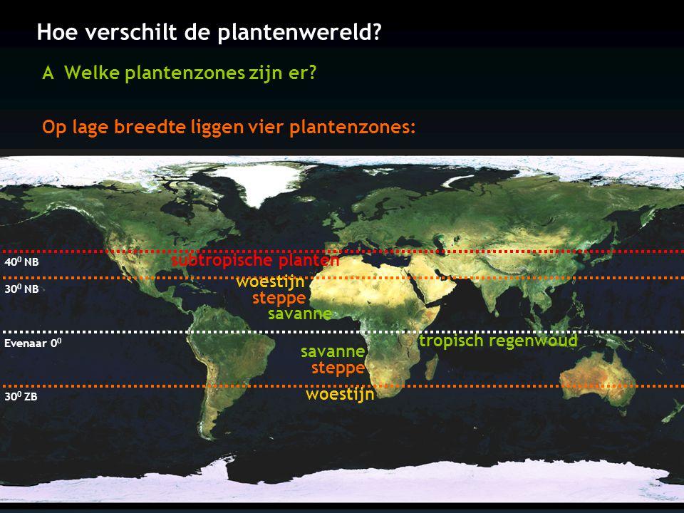Hoe verschilt de plantenwereld