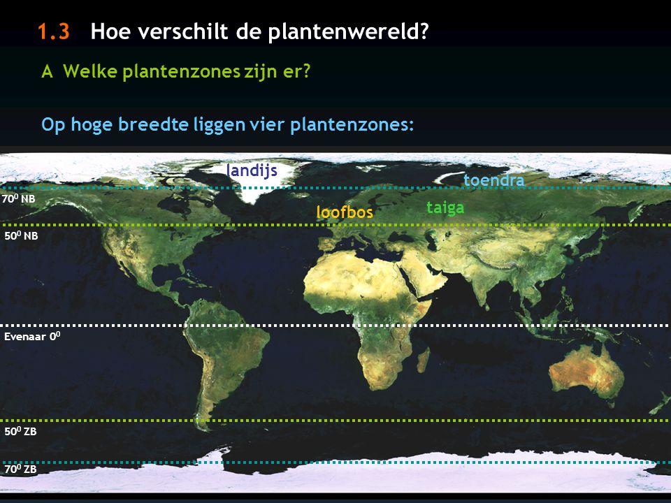 1.3 Hoe verschilt de plantenwereld