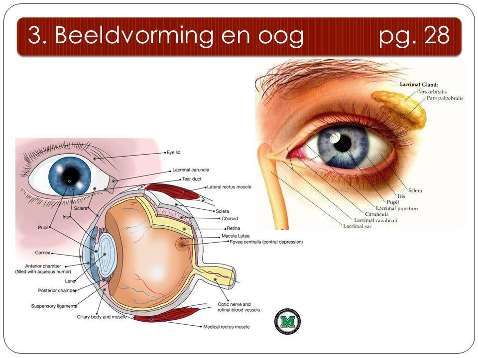 3. Beeldvorming en oog pg. 28