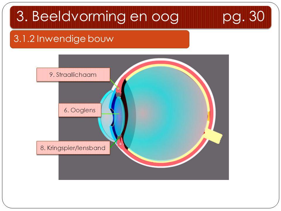 3. Beeldvorming en oog pg. 30 3.1.2 Inwendige bouw 9. Straallichaam