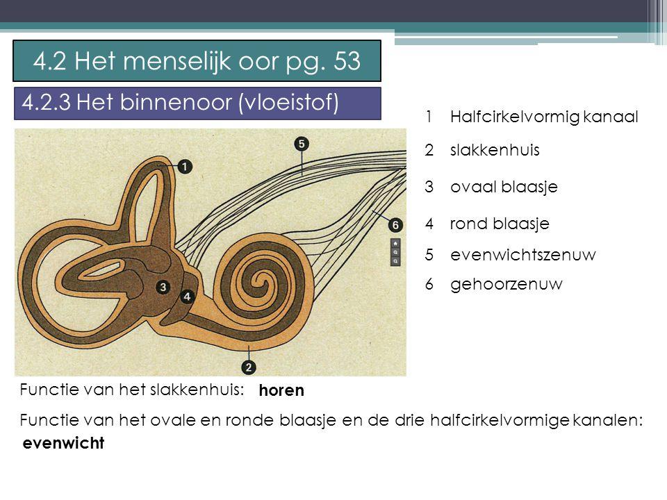 4.2 Het menselijk oor pg. 53 4.2.3 Het binnenoor (vloeistof) 1