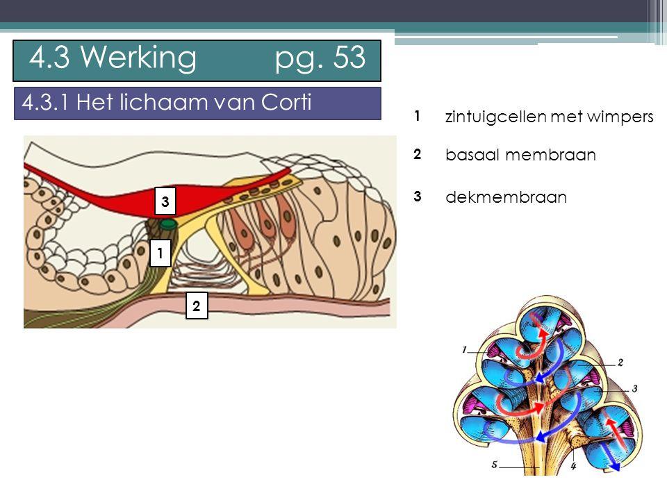 4.3 Werking pg. 53 4.3.1 Het lichaam van Corti