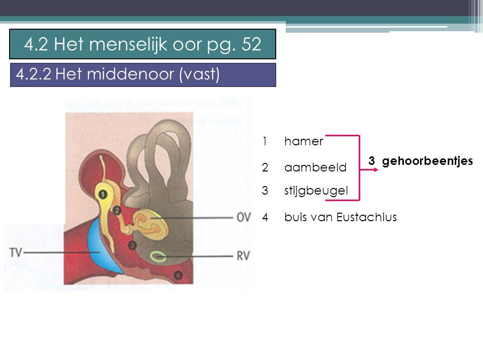 4.2 Het menselijk oor pg. 52 4.2.2 Het middenoor (vast) 1 hamer