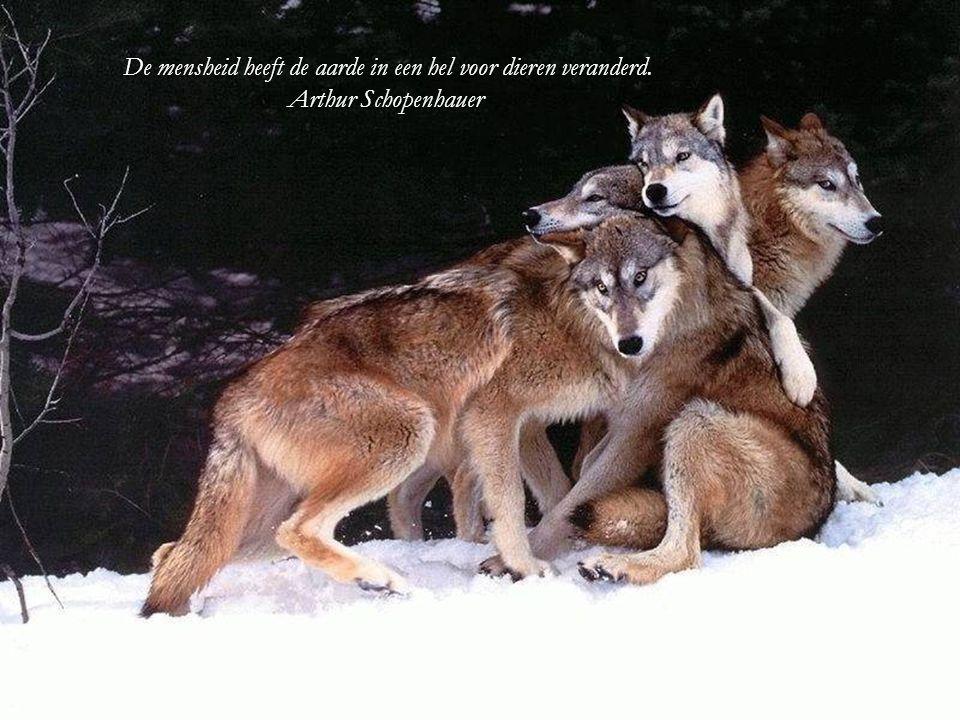 De mensheid heeft de aarde in een hel voor dieren veranderd.