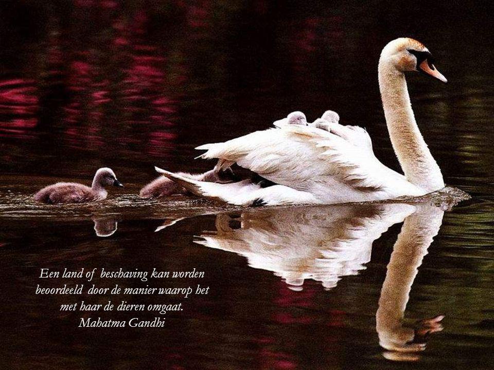 Een land of beschaving kan worden beoordeeld door de manier waarop het met haar de dieren omgaat.