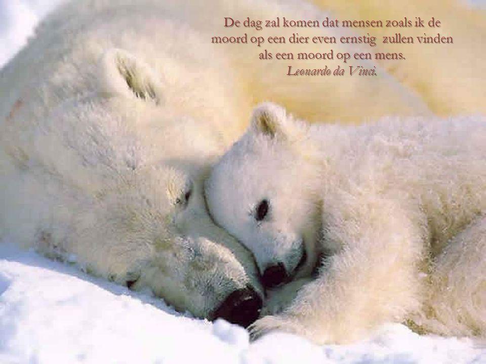 De dag zal komen dat mensen zoals ik de moord op een dier even ernstig zullen vinden als een moord op een mens.