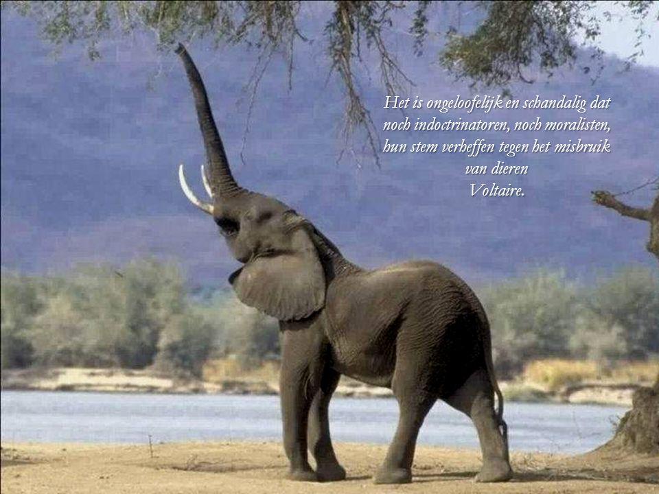 Het is ongeloofelijk en schandalig dat noch indoctrinatoren, noch moralisten, hun stem verheffen tegen het misbruik van dieren